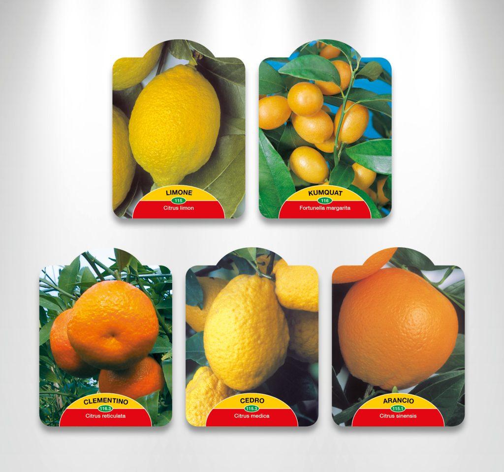 Etichette per agrumi